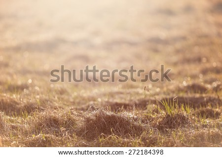 Dry grass field pasture in sunset sunlight, filtered - stock photo