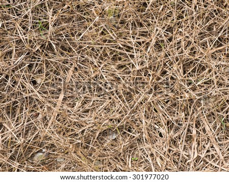 Dry grass field texture background