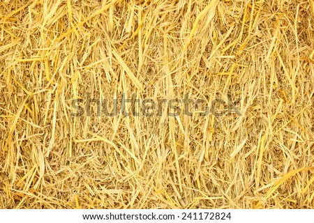 dry grass, hay, straw textured border background vintage style - stock photo
