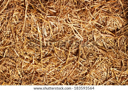 dry grass, hay, straw textured border background vintage style with text space on right side - stock photo