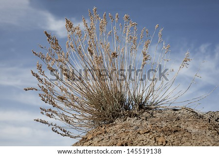Dry grass on the hill in Badlands Alberta - stock photo