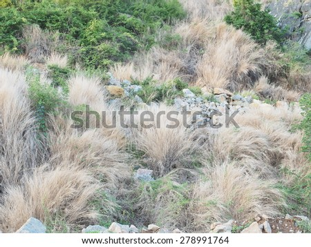 Dry grass on the limestone mountain. - stock photo