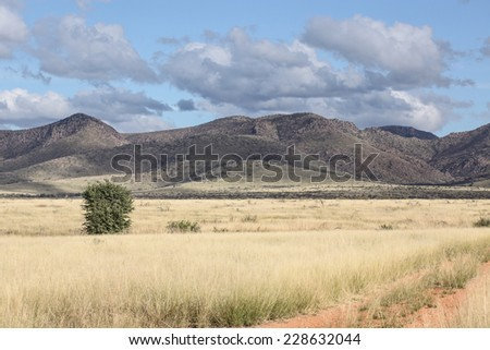 Dry grassy Autumn pasture and tree with hills on cloudy day with blue sky /Semi-desert Grasslands, Green Tree and Mountains on Cloudy Blue Sky Day in Autumn/Dry grassy pasture in Fall season - stock photo