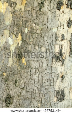 Dry green cracked tree bark texture closeup - stock photo