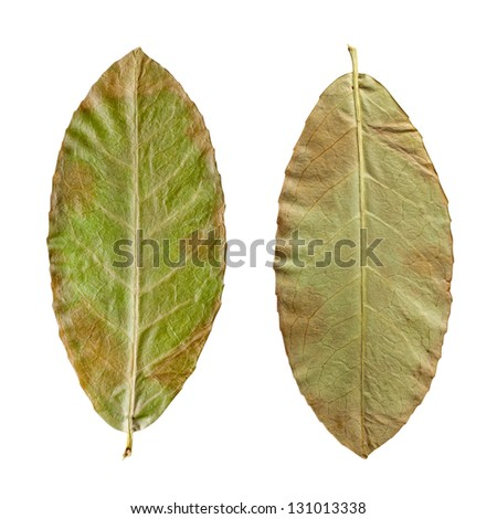 dry green leaves on the white background, clipping path included.