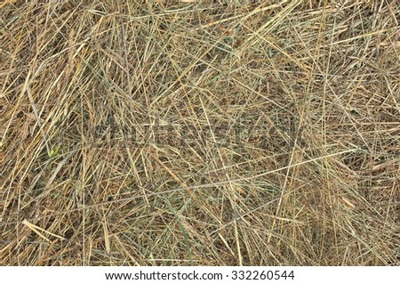 Dry hay background. Texture closeup in color. Fodder for livestock and construction material. - stock photo