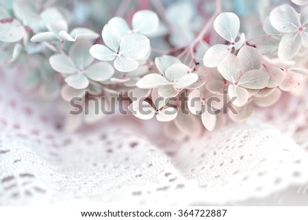 Dry hortensia flower on decorative white lace