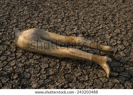 Dry land. Broken mannequin on Cracked ground background and texture. - stock photo