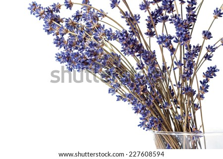 dry lavender blue flowers in a vase - stock photo