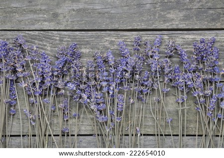 Dry lavender flowers on the wooden background - stock photo