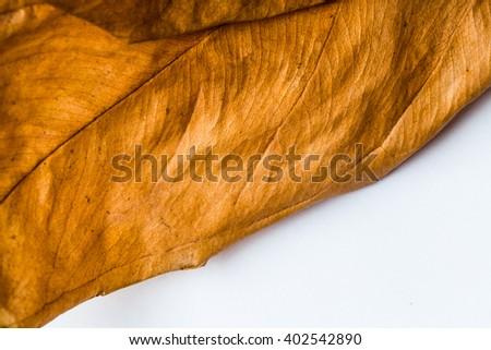 Dry leaf background - stock photo