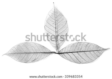 Dry leaf detail texture in front to light, Seamless vein pattern - stock photo