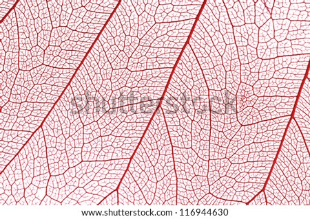 Dry leaf detail texture on white background - stock photo