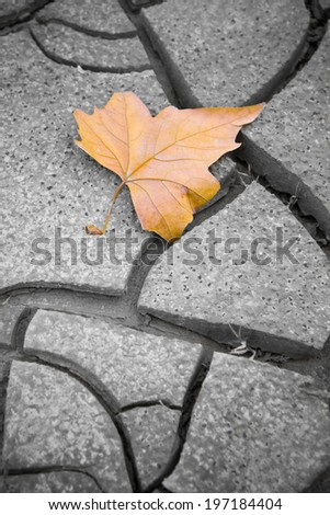 Dry leaf on dry ground. Picture useful to express the concepts of: life, death, melancholy, sadness, pessimism, hope, and so on ...