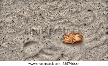 dry leaf on the sand. Processed for hdr tone mapping effect. - stock photo