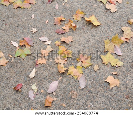 Dry leaf pattern detail - stock photo