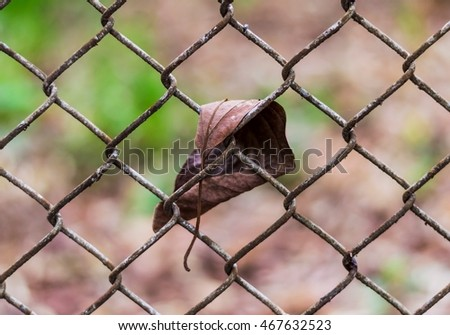 Dry leaf stuck on a fence made of wire