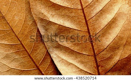 Dry  leaf texture background