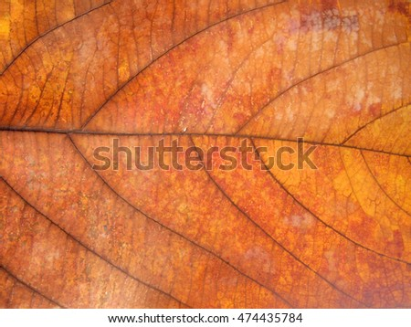 Dry leaf texture for pattern