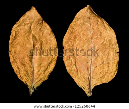 dry leaf tobacco closeup on the black background - stock photo