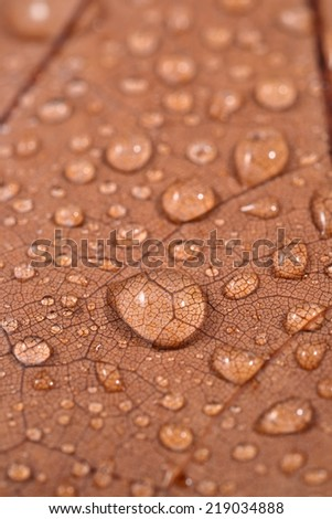 Dry leaf with water drops close up