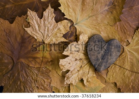 dry leaf with wooden heart