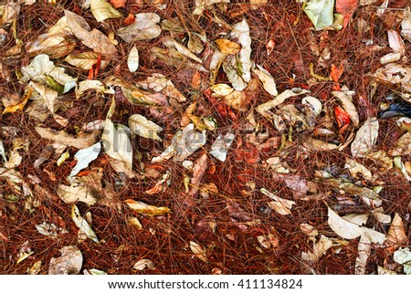 dry Leaves and pine needles on the forest floor , leaves background - stock photo