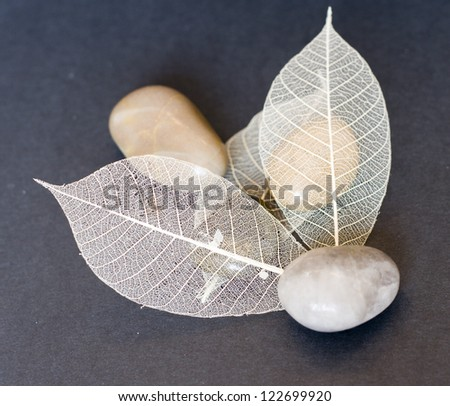 Dry leaves and stones composition - stock photo