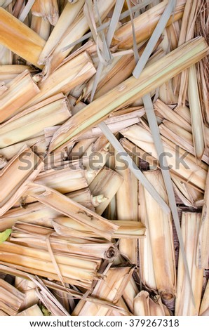 Dry leaves background