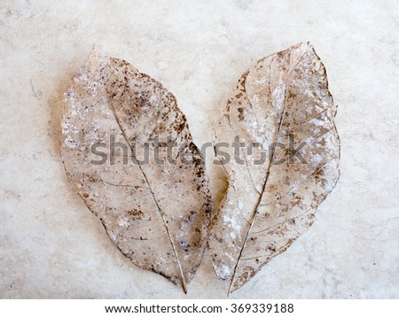 Dry leaves detail texture, select focus - stock photo