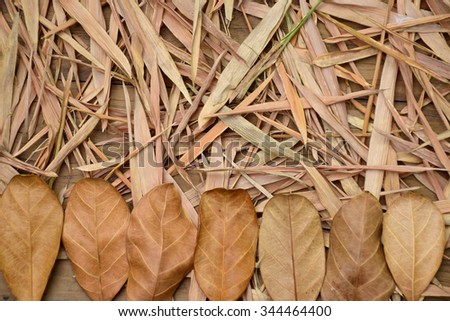 Dry leaves for background in vintage style - stock photo