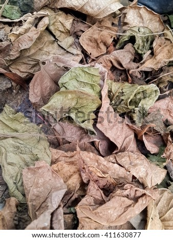 dry leaves on ground in autumn garden