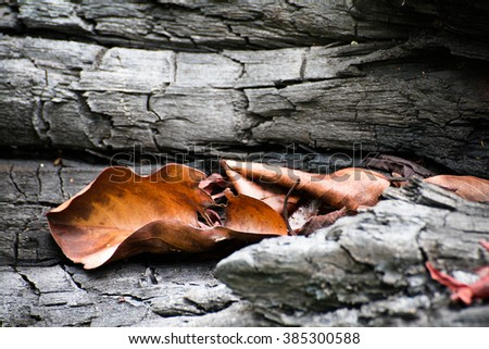 Dry leaves on timber