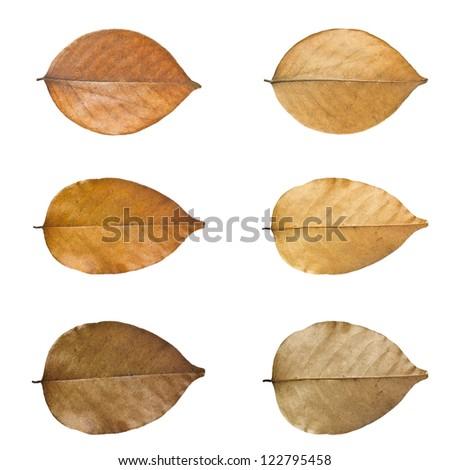 Dry leaves set isolated on white background. - stock photo