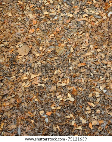dry leaves texture on ground - stock photo