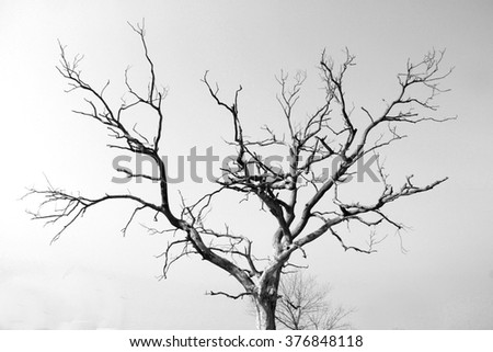 Dry lifeless tree with sky in the background