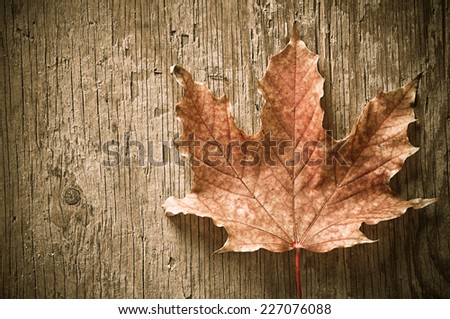 dry maple leaf on wood background - stock photo