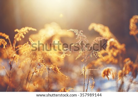 dry meadow flowers and plants in winter field on yellow natural beautiful sunny background. Outdoor vintage photo