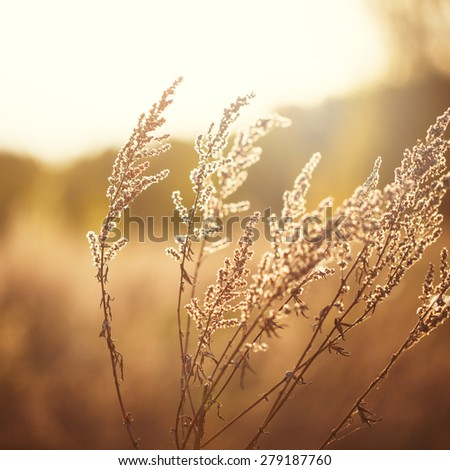 dry meadow flowers in field on forest nature background