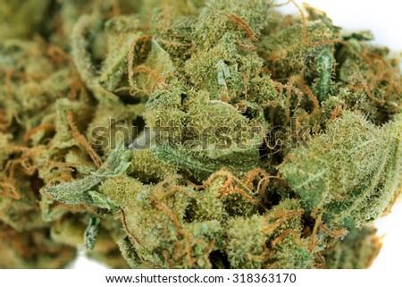 Dry medical cannabis close up - stock photo