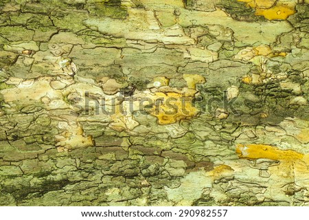 Dry old cracked tree bark texture