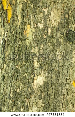 Dry old cracked tree bark texture closeup - stock photo