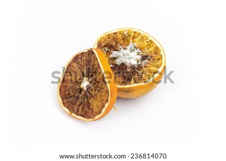 Dry orange with fungi - stock photo