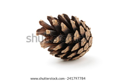 dry pine cone with light shadow on white background - stock photo