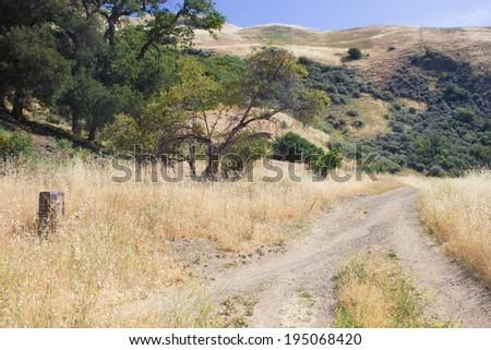 Dry plant and Green trees at Alum Rock, San Jose, California, USA. - stock photo
