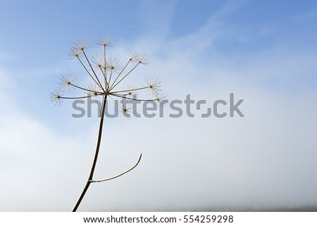 Dry plant on a background of blue sky in autumn