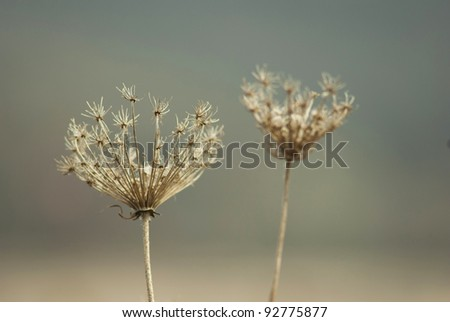 dry plants, autumnal meadow - stock photo