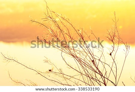Dry plants grow on the background of the autumn landscape