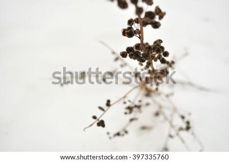 Dry plants in ice - stock photo