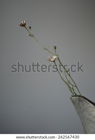 Dry plants of the centaurea family in a metal vase - still life - stock photo